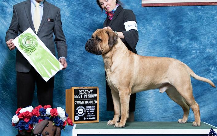Hudson – Reserve Best in Show Owner-Handled!